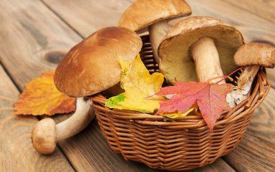 Las setas: el superalimento de otoño